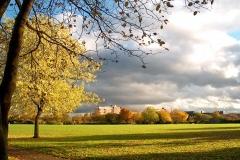 Autumn Leaves Billingham